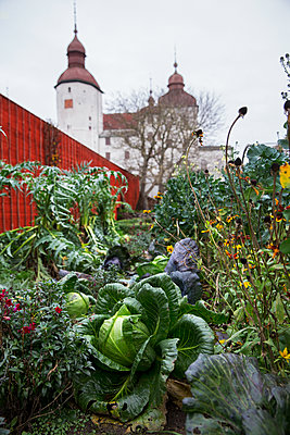 Garden with vegetables - p312m1556823 by Lena Granefelt