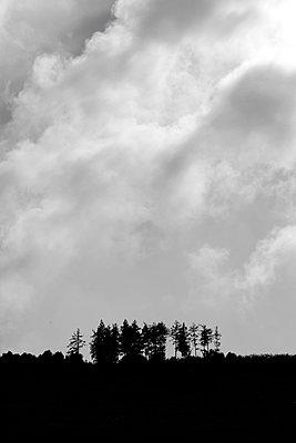 Baumgruppe     - p450m1172659 von Hanka Steidle