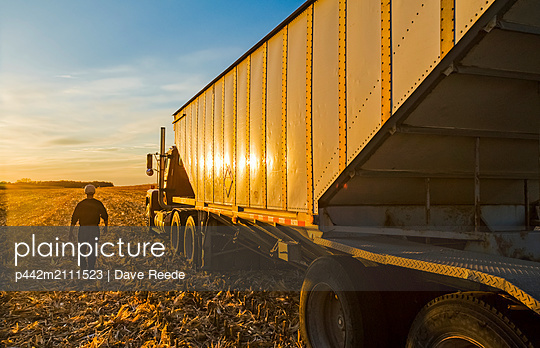 A farmer walks to his farm truck at sunset during the feed/grain corn harvest, near Niverville; Manitoba, Canada - p442m2111523 by Dave Reede