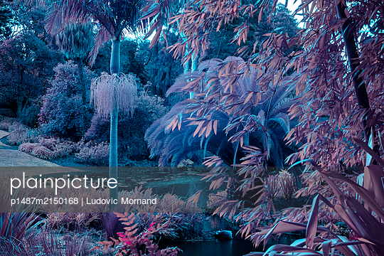 Infrared, Botanical garden in Melbourne - p1487m2150168 by Ludovic Mornand