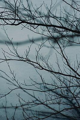 Äste im Nebel - p1184m1424771 von brabanski