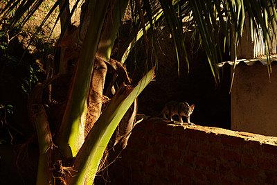 Wild Cat - p910m767295 by Philippe Lesprit