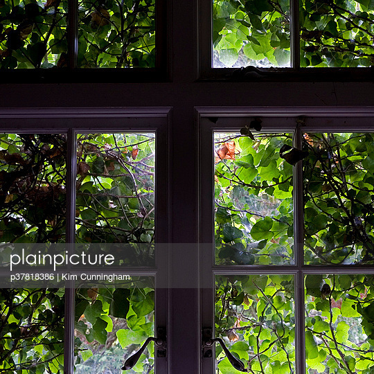 Ivy covered window - p37818386 by Kim Cunningham
