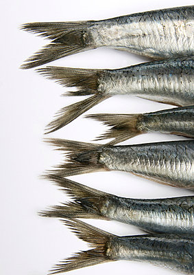 Fish tails - p8130332 by B.Jaubert