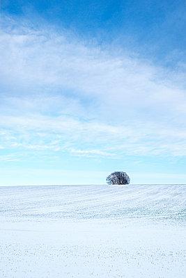 Großbritannien, Einzelner Baum am Horizont - p1057m2237820 von Stephen Shepherd