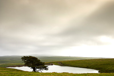 Tree and Pond - p1489m1575406 by Paul Simcock