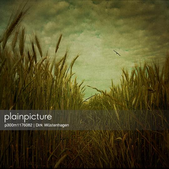 Track through barley field - p300m1176082 by Dirk Wüstenhagen