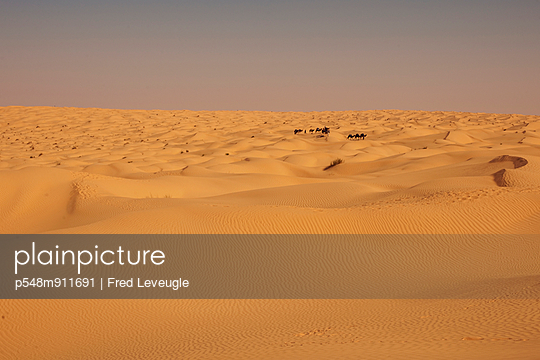 Camel train at the Sahara - p548m911691 by Fred Leveugle