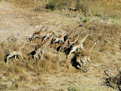 Botswana - p6520159 by Nigel Pavitt