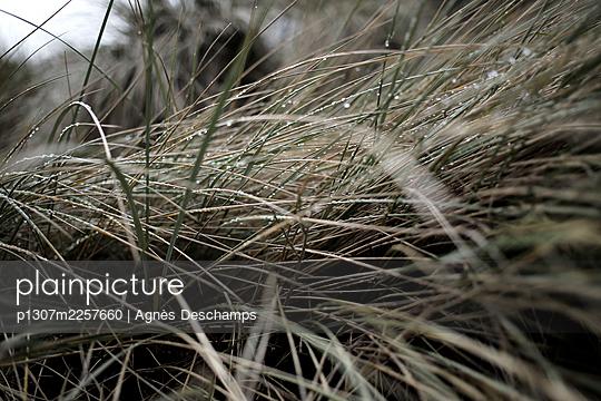 Marram Grass - p1307m2257660 by Agnès Deschamps