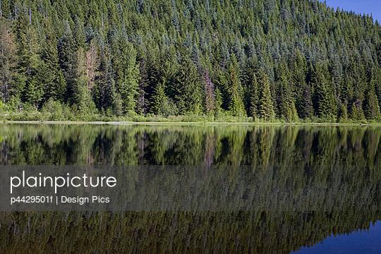 p4429501f von Design Pics