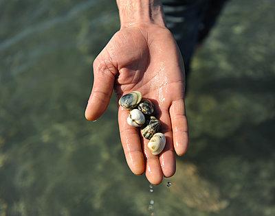 Muscheln auf einer Handfläche - p1468m1584962 von Philippe Leroux