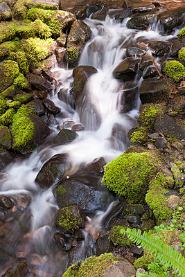 Water flowing over mossy rocks, Olympic National Park, Washington, USA - p624m1101427f by Jerome Gorin