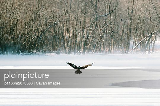 p1166m2073508 von Cavan Images