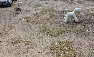 Plastic Dog - p1082m2065509 by Daniel Allan