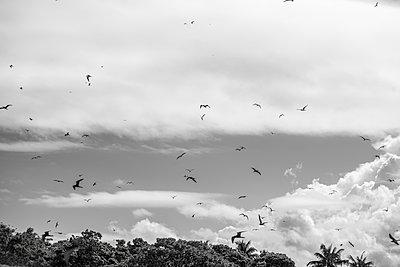 Polynesien, Vögel fliegen über Bäume - p1487m2253939 von Ludovic Mornand