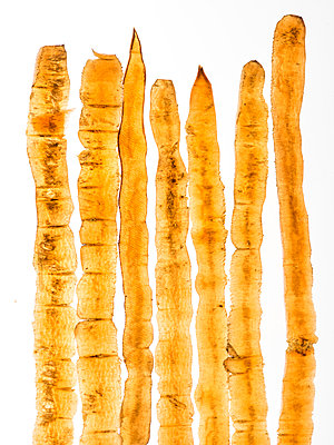 Carrots shells - p401m1590140 by Frank Baquet