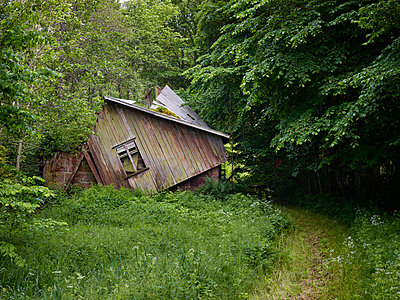 Abandoned wooden hut in forest - p312m1121567f by Jan Tove