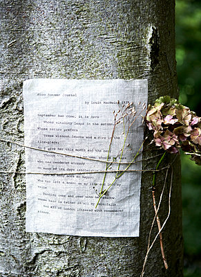 Dried flowers and typewritten letter tied with string to treetrunk in Isle of Wight;  UK - p349m920041 by Rachel Whiting