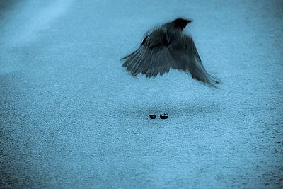 Rabenvogel - p4170175 von Pat Meise