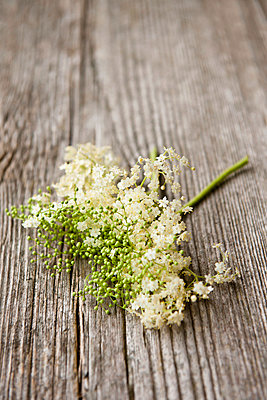 Elderflowers - p533m908642 by Böhm Monika