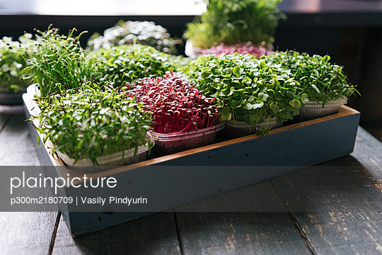 Box with microgreens on wooden table - p300m2180709 by Vasily Pindyurin