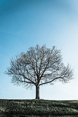 Einzelner Baum - p1170m2081715 von Bjanka Kadic