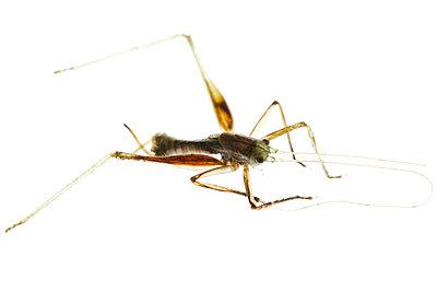 Dry grasshopper - p4010655 by Frank Baquet