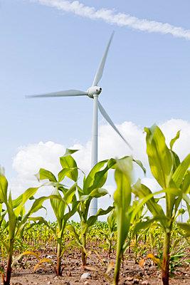 Windrad auf einem Maisfeld - p570m816657 von Elke Röbken