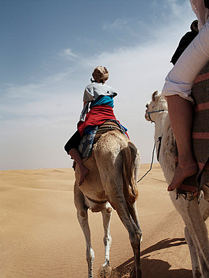 People riding dromedaries in the desert, Tunisia. - p31224273 by Lena Koller