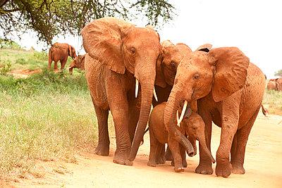 National park in Kenia - p5330289 by Böhm Monika