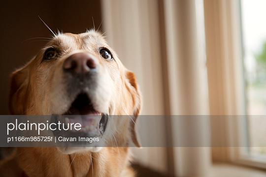 p1166m985725f von Cavan Images