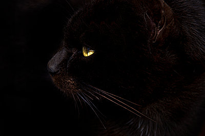 Cat with yellow eyes - p1445m2125679 by Eugenia Kyriakopoulou