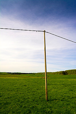 Telegraph pole in the field. France. - p813m1039466 by B.Jaubert
