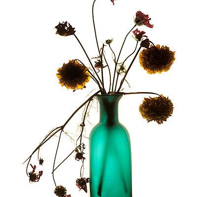 Dead flowers - p813m778781 by B.Jaubert