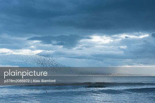 Murmuration   - p378m2085972 by Alex Bamford