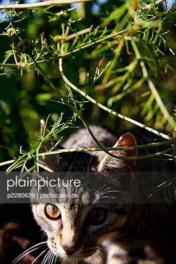 Anpirschen - p2280639 von photocake.de