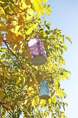 Lampions im Walnussbaum - p533m1496768 von Böhm Monika