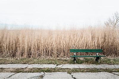 Grüne Sitzbank vor einem Schilf das im Winde weht - p1383m1333027 von Wolfgang Steiner