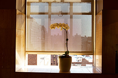 Potted flower - p584m960422 by ballyscanlon