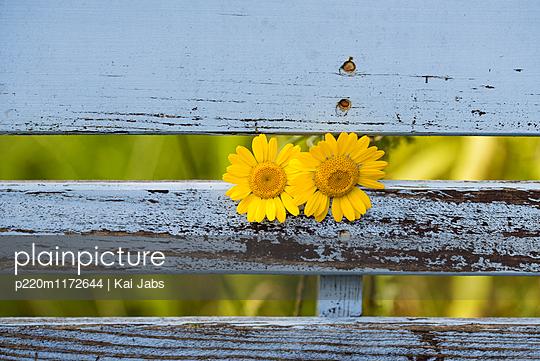2 Blüten - p220m1172644 von Kai Jabs