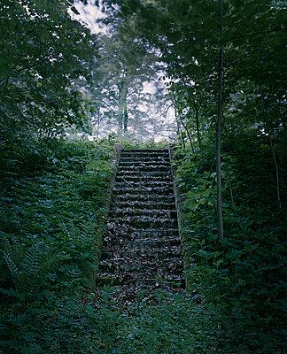 Laub auf verlassener Treppe im Wald - p1481m2210522 von Peo Olsson