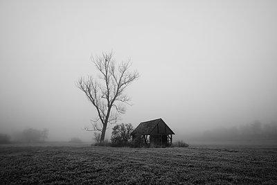 Nebel am Morgen - p1574m2147965 von manuela deigert