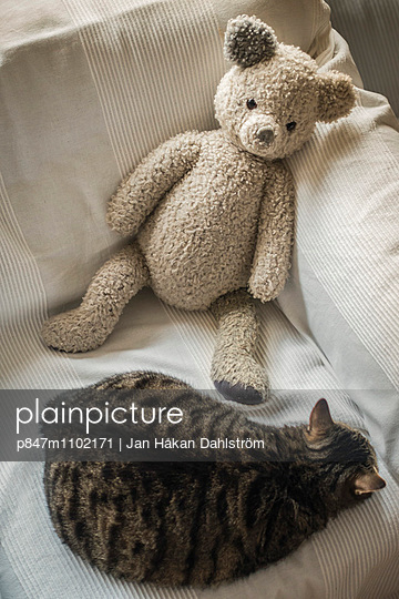 Soft Toy With The Cat On Couch