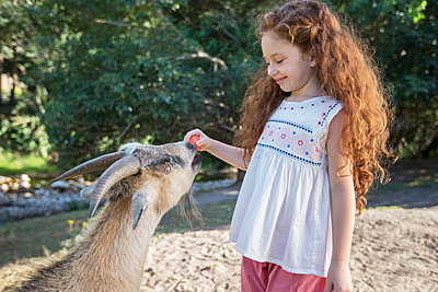 Girl feeding animal in forest - p1023m947040f by Robert Daly