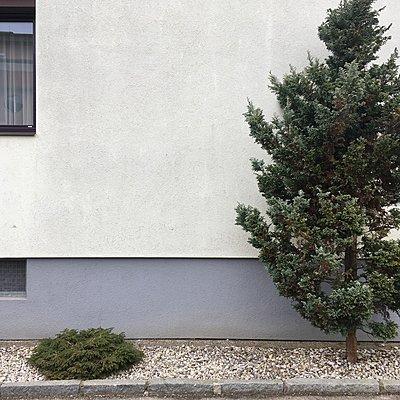 Bepflanzung mit Nadelgehölz dicht an der Hauswand - p1401m2254164 von Jens Goldbeck