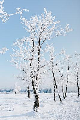 Verschneite Bäume - p586m2005072 von Kniel Synnatzschke