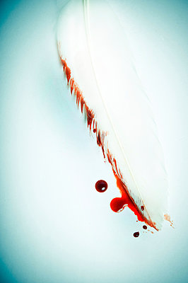Bird feather stained with blood - p965m1529027 by VCreative