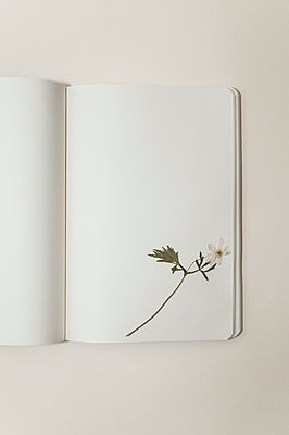 Dried flower on notebook page - p971m1115451 by Reilika Landen
