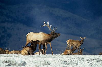 Im Yellowstone Park - p3300492 von Harald Braun